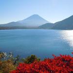 本栖湖から眺めた富士です。紅葉と枯れ尾花も綺麗でした。       ・真っ赤なる紅葉も眺め富士も見て(和良)