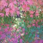 よく見ると紅葉の色は何色にも見えました。                ・緑より赤へ紅葉の色の数(和良)