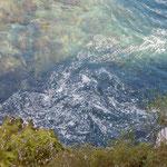 月ヶ谷温泉の渓流を見下ろすと落花が一塊になっていました。  ・見下ろせる谷底深し河鹿鳴く(和良)