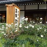 小田原市の鈴廣蒲鉾店の本店です。玄関に秋海棠が咲いていました。     ・玄関に秋海棠の花明かり(和良)