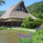 白川郷の合掌集落には昔のままにあやめが咲いていました。                             ・あやめ咲く合掌の里水の里(和良)