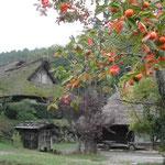 柿が実る飛騨の里は昔懐かしい古里の風景でもありました。  ・安穏といふ幸せや柿実る (和良)