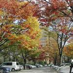 徳島県庁の駐車場は紅葉の盛りでした。思わずシャッターを切りました。 ・ふるさとの照葉しみじみ眺めをり(和良)