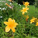 ヴァヴェル城の百合の可憐さは見惚れるほどでした。          ・一服し花壇の百合の花を見る(和良)