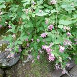雲洞庵は上杉景勝と直江兼続が幼少の頃学んだ寺でもあります。     ・名刹に庭ひろびろと萩の花(和良)