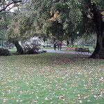 ジュネーブ湖畔のイギリス公園で見た落ち葉です。 ・静けさや光に浮かぶ濡れ落ち葉(和良)