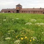 第二のアウシュビッツと呼ばれるビルケナウ強制収容所です。      ・監獄は花野の中にありにけり(和良)