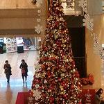 人の背の何倍もある大きな聖樹でした。                  ・空港のいつもこの場所大聖樹(和良)