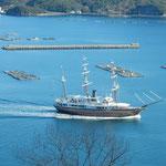 波静かな福良港は鳴門の渦潮の観潮船の観光基地ともなっています。   ・初旅に鳴門観潮する人も(和良)