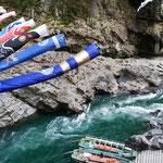 大歩危渓谷を舟下りしました。岩躑躅が咲き競っていました。      ・大歩危を舟で下れば岩躑躅(和良)