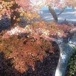 東大寺の参道では冬紅葉と角狩りの終った鹿を見ました。          ・奈良に来て冬紅葉見て鹿も見て(和良)