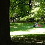 クラクフには緑豊かな公園があり、バカンスを楽しんでいました。    ・緑陰でバカンス過ごす家族かな(和良)
