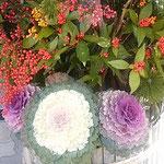 徳島市で開かれた新年賀詞交歓会の門松は葉牡丹が輝いていました。・葉牡丹の白のまぶしき飾かな(和良)