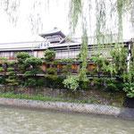 伊東温泉を代表する湯宿として栄華の歴史を刻んで来た東海館です。     ・鉄幹と晶子の湯宿柳散る(和良)