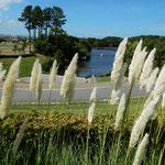 兵庫県南あわじ市のイングランドの丘で見たパンパスグラスです。    ・真白なるパンパスグラス風は秋(和良)