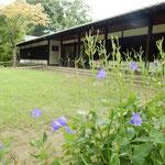 小諸市の懐古園にある島崎藤村記念館です。桔梗が咲いていました。   ・桔梗咲く島崎藤村記念館(和良)