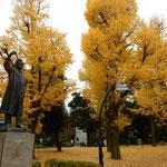 上野公園の野口英世像は大きな銀杏並木を背に立っていました。          ・銀杏散る野口英世の像の背に(和良)