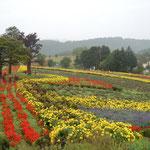 美瑛町の「ぜるぶの丘」では綺麗な花が咲き競っていました。                             ・秋雨に色増しにけり丘の花(和良)
