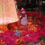 上海のホテルのロビーにはポインセチアの赤が氾濫していました。  ・ポインセチア赤のひしめくロビーかな (和良)