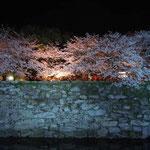 徳島城の夜桜です。お堀の方から眺めると石垣が白く浮き出て幻想的でした。  ・夜桜の城の石垣白々と(和良)