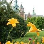 ヴァヴェル城の庭園には百合も咲いていました。            ・中世の城の花壇の百合の花(和良)