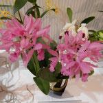 展示会場には愛好家の育てたいろんな種類の蘭が並んでいました。 ・室に咲く蘭の香りの濃く淡く(和良)