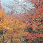 箱根で宿泊した小涌園のホテルの庭園は紅葉の盛りでした。       ・紅葉の盛りの宿に来合せて(和良)