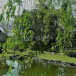 湯築城跡は綺麗に整備され往時がしのばれました。           ・中世を模せし庭園青柳(和良)