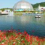 連休に香川県のレオマワールドに行ってきました。              ・遊園地池を巡りてポピー咲く(和良)