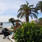 アドリア海に面したスプリットは温かくカンナが咲いていました。    ・椰子茂る海岸カンナ咲き続く(和良)