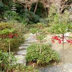 瑞巌寺の庭園には万両と千両と南天の実が赤を競っていました。          ・万両よ千両よ南天の実よ(和良)