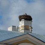 ルンダーレ宮殿にはこふのとりが大きな巣を作っていました。      ・宮殿のこふのとりの巣大きかり(和良)
