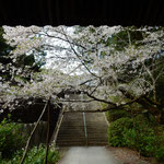 阿波市土成町の熊谷寺の中門を潜ると落花が舞っていました。 ・本堂へ門を潜れば飛花落花(和良)