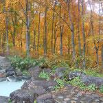 燕温泉から妙高の登山口を少し登ると乳白色の露天風呂がありました。                      ・紅葉の中に秘湯あり露天なる(和良)