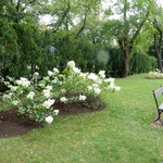 ワルシャワの中央部にあるワジェンキ公園は緑豊かな公園でした。    ・ショパン像ありし公園四葩咲く(和良)