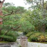 迎賓館の中庭に大きな花梨の木があり、大きな実がなっていました。      ・大振りや迎賓館の花梨の実(和良)