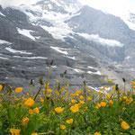 アイガーグレッチャーからグリンデンワルトまでハイキングしました。                         ・靴の紐締めて下山のハイキング(和良)