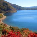 本栖湖は波一つなく青々と澄み渡っていました。            ・本栖湖の水青々と澄みに澄み(和良)