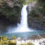 伊豆半島最大の滝といわれる浄蓮の滝です。迫力がありました。              ・浄蓮の滝の隣に山葵の田(和良)