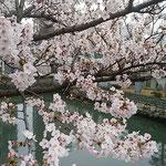 「咲き満ちてこぼるる花もなかりけり」の句の通りでした。       ・咲き満てる花に虚子の句諳んじる(和良)