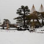 松の雪吊が一段と美しい雪の日の兼六園を散策しました。        ・雪吊の兼六園へ雪の日に(和良)