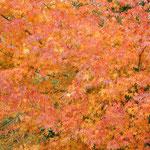 寒霞渓のロープウエイ山頂駅周辺の紅葉は見ごたえがありました。 ・大綿の一つの消えてそれっきり(和良)
