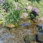 湧水源にある水温計で測定すると摂氏12度でした。             ・水温計下がる速さや草清水(和良)