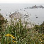 伊豆半島の真鶴岬の突端にはよく知られている三つ岩が見えました。   ・真鶴の三つ岩そこに石蕗の花(和良)