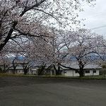 今年は新型コロナウイルスのためにお花見ができませんでした。 ・今年またいつものやうに桜咲く(和良)