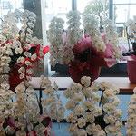 新しく誕生した銀行のロビーにはたくさんの蘭が飾られていました。 ・新築のロビー明るき室の蘭(和良)