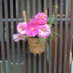 妻籠宿では格子に綺麗な花が飾られていました。                                     ・コスモスを手桶に活けて妻籠宿(和良)