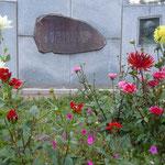 鰊漁が盛んな頃の番屋が残されている小樽市鰊御殿も見てきました。                       ・ダリア咲く鰊御殿は大番屋(和良)
