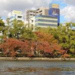 アクアライナーに乗船しての大阪の川巡りでは桜紅葉が綺麗でした。   ・大阪の川に桜の紅葉見る(和良)
