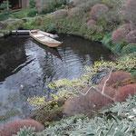 八王子市の鶯啼庵で食事をしました。庭園で見た山茱萸の花です。 ・坪庭に山茱萸の花明かりかな (和良)